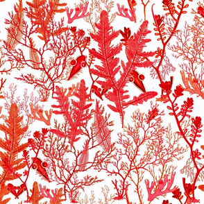 coral and seaweed #1 (red/orange)