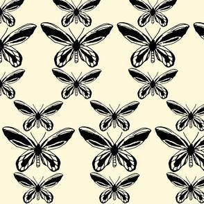 Queen Alexandra Birdwing Butterfly - Cream