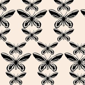 Queen Alexandra Birdwing Butterfly - Blush