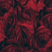 Rrroses_red_variation_bluer_shop_thumb