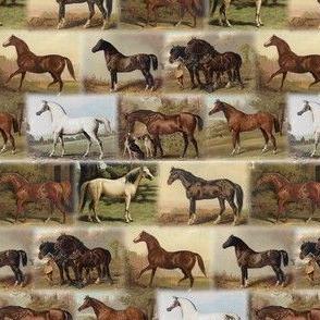 Cassells Horses