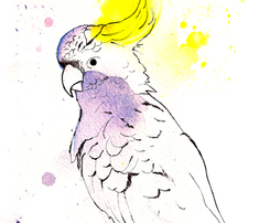 Rrrrcockatoo_design_with_claw_comment_251959_thumb