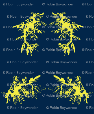 two-tone seadragons frolic