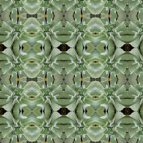 Green Succulents_5153
