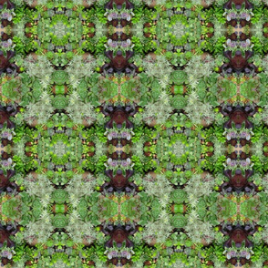 Green Succulents Grouping_4673