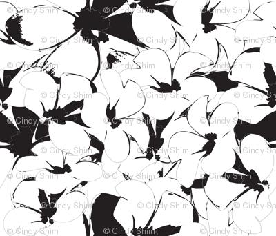 White-Black- frangipani Flower