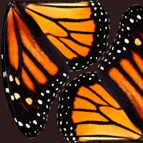 Orange Monarch Butterfly Wings