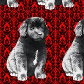 Rrbrocade_newfoundland_puppy__shop_thumb