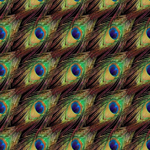 Peacock Feathers - Single - Checkerboard