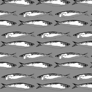 Greyblackwhitesardine