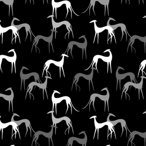 sighthounds-black