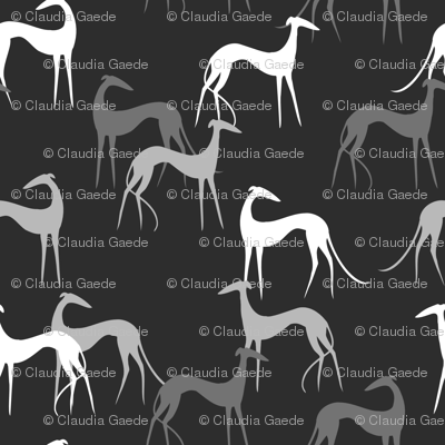 sighthounds-grey