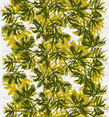 Piney Boughs