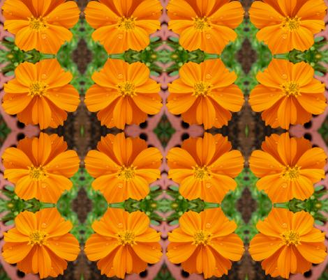 Orange Cosmo fabric by carmenscottagecreations on Spoonflower - custom fabric