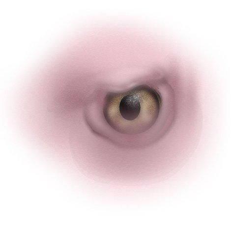 Rrrvulture_eye_shop_preview