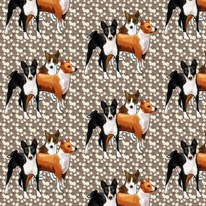 three basenji dogs
