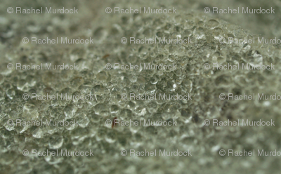 Winter Mosaic-Small