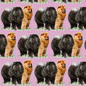 Rr1721502_rred_and_black_chows2_shop_thumb