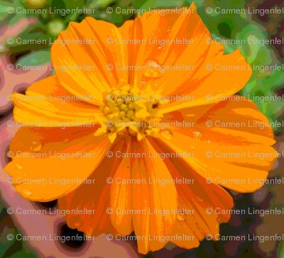 Cartoon Orange Cosmo
