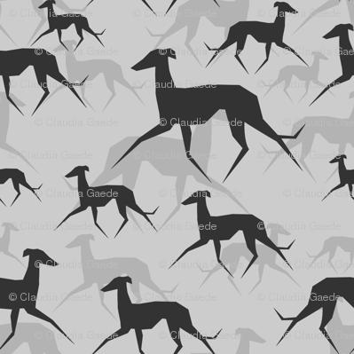 Italian Greyhound in grey