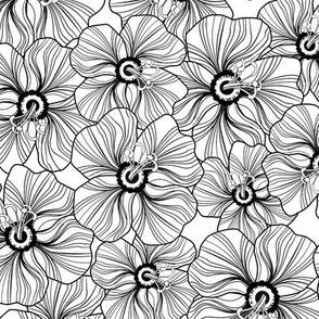 My garden-in black and white.