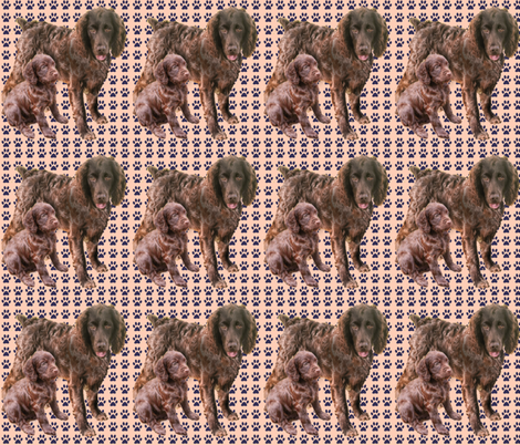 Boykin Spaniel Mother and pup fabric fabric by dogdaze_ on Spoonflower - custom fabric