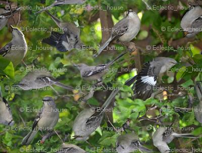 Mockingbird on bougainvillea