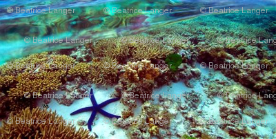 GreatBarrierReef