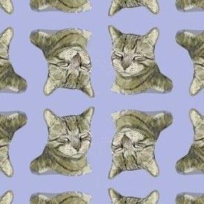 Nameless Tygr Tabby Cat