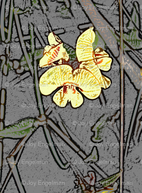 Native Pea Flower