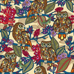 My boobooks,Australian owls.