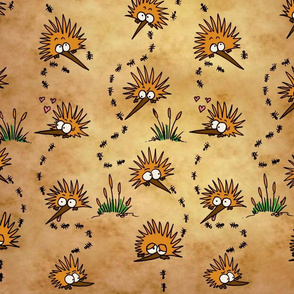Echidnas munching ants