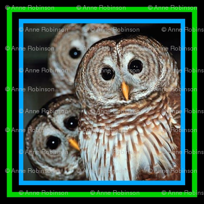 owls-150-ed