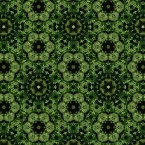 Macro Kale Kaleidoscope