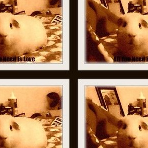 Sepia Guinea Pig