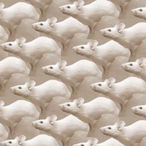 Curious Mice