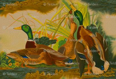 Antique Mallard Ducks - Robert Havell