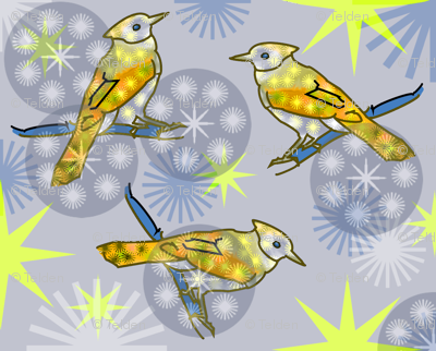 Yellow Bluejay - Gray