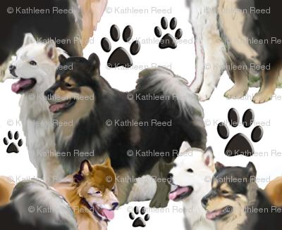 Finnish  Laphund dog fabric