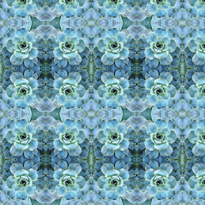 Aqua Succulent Recolored 2013