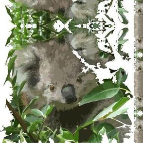 Australian_Koala