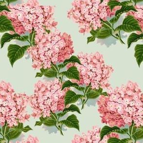 Hydrangea Pink No I