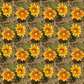 Flowers of the Sun