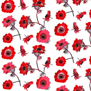 anemones red and white