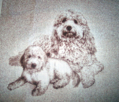 Rgoldendoodles_family_comment_261985_thumb