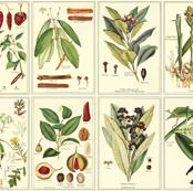Botanical Spices