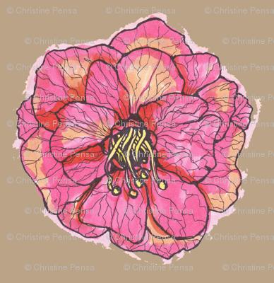 Pink Rose on Tan Background