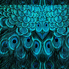 TEAL BLUE PEACOCK FEATHERS