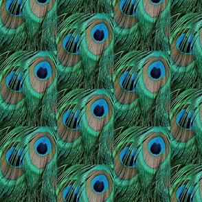 PEACOCK TEARDROPS