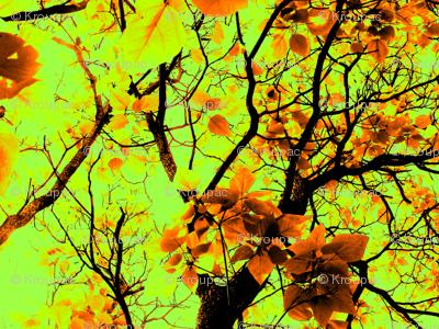 Fall Catalpa Trees